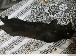 Black cat on badk on bed