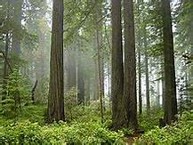 forest, moss